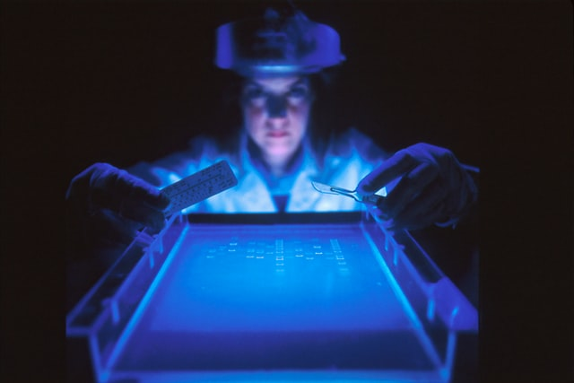 researcher illuminated by a blue light as they lean over a pan